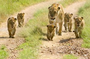 Explore Maasai Mara National Reserve, Kenya