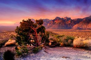 Hike or Rock Climb Red Rock Canyon, Nevada