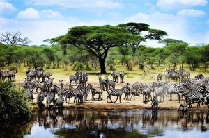 Explore Serengeti National Park, Tanzania (UNESCO site)