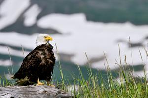 Explore Lake Clark National Park, Alaska