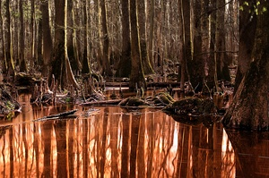 Explore Congaree National Park, South Carolina