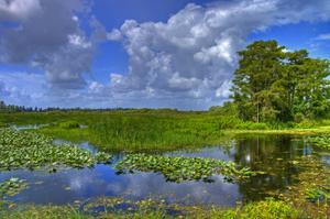 Explore Everglades National Park, Florida (UNESCO site)